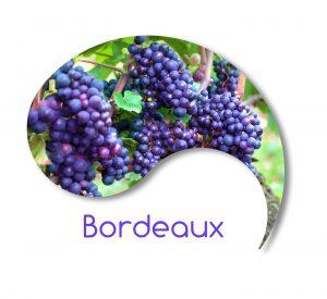 racines coréennes à Bordeaux